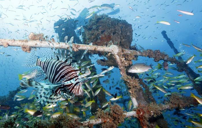 Drakfiskar utanför Phi Phi Island. Foto Sören Andersson www.2see.se